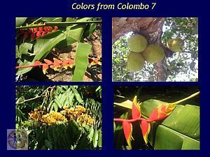 colors-of-sri-lanka