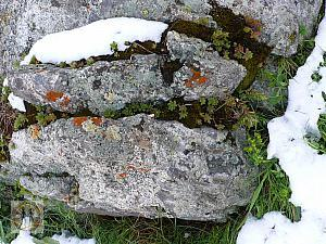 big-almaty-lake-rock-snow-plants